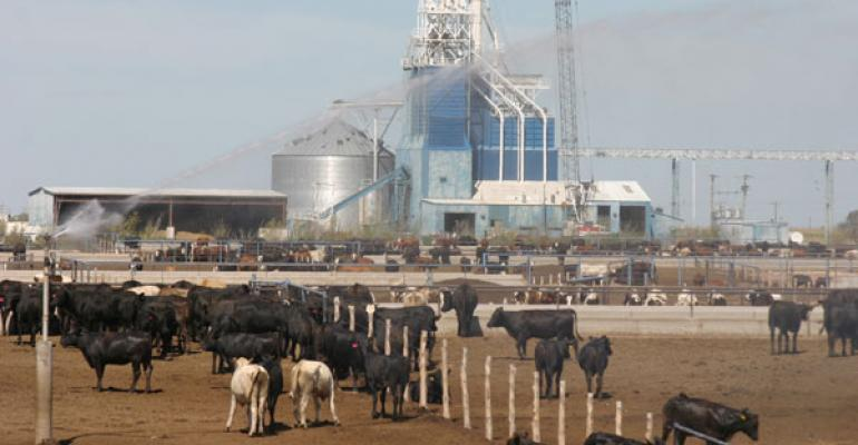 feedlot placements sharply lower cattle markets react