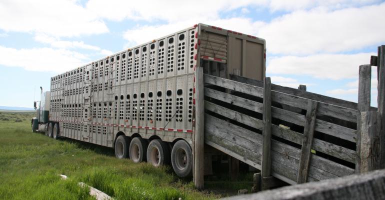 cattle traceability rule now in effect
