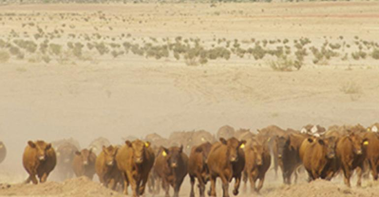 what if drought continues in cattle country