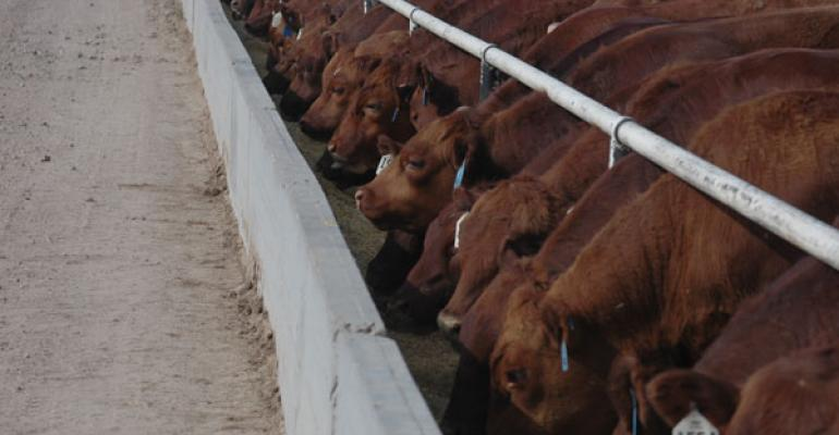higher fed cattle prices markets