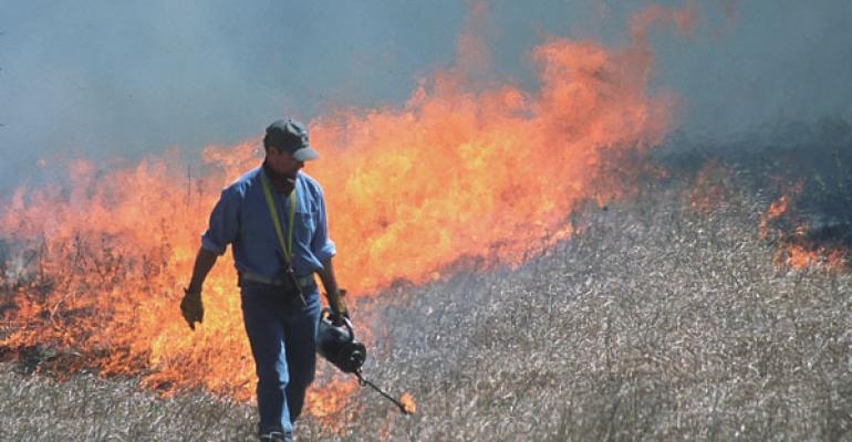 patch burning helps with cattle fly control
