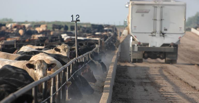 beef cattle price outlook
