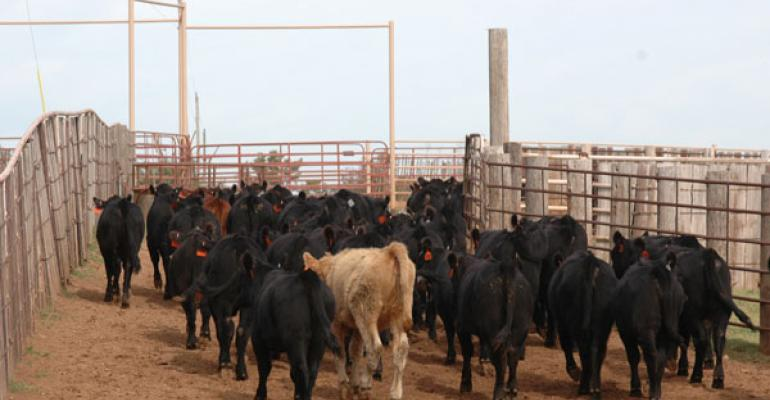 beef cattle prices go lower