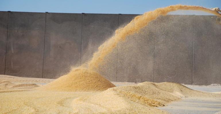 corn prices drop cattle prices go up