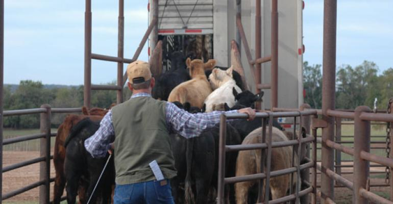 cattle prices gain traction