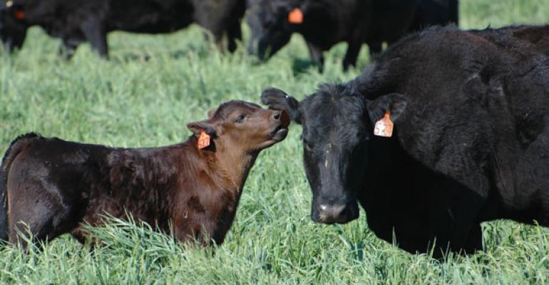 animal welfare  cowcalf health are major beef industry issues
