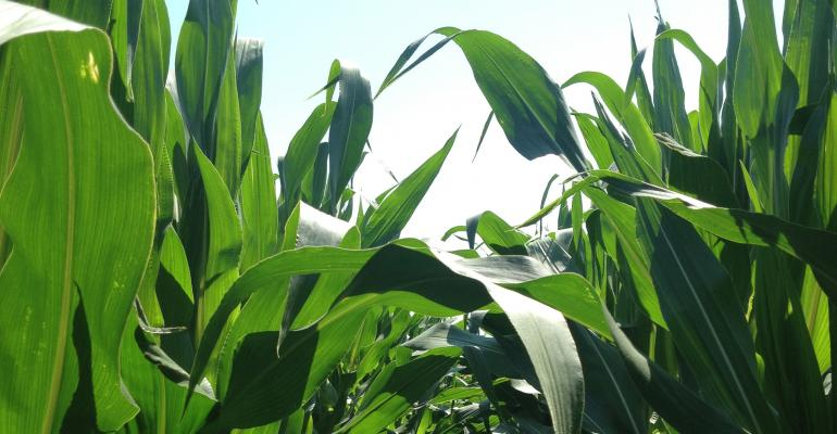 USDA reports that corn planting lags in spring 2013