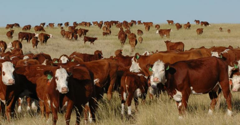 cattle prices forecasted out for the next decade