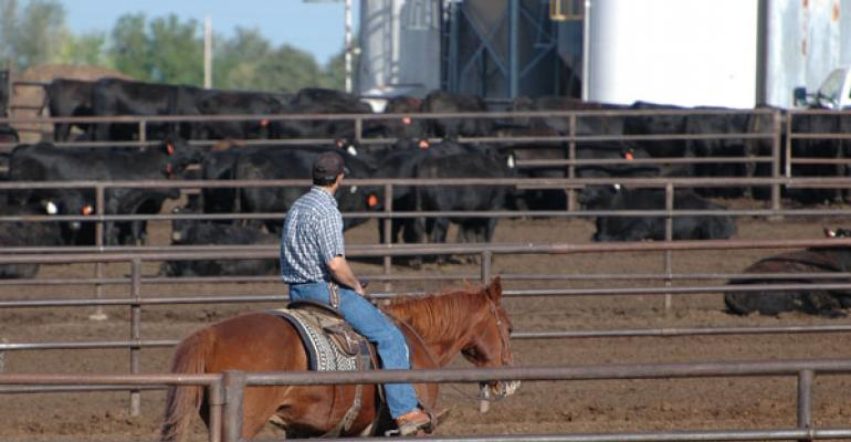 feedlot quality assurance fed cattle management