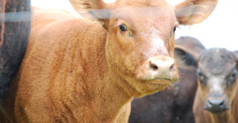 cowherd profits lower in 2013