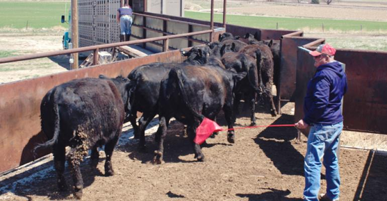 stress on the beef ranch