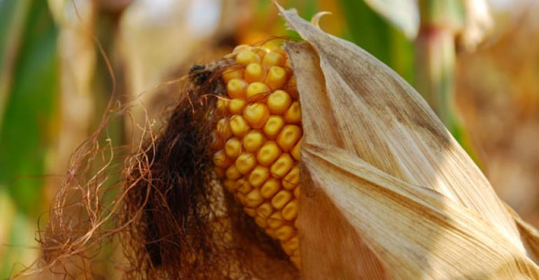 record corn prices will result after bin busting year