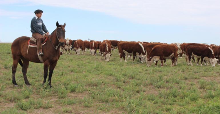argentina beef industry