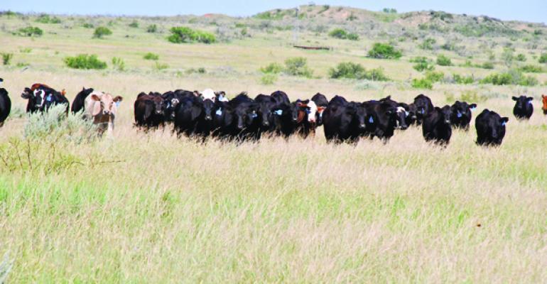 stocker opportunity has grown in beef industry