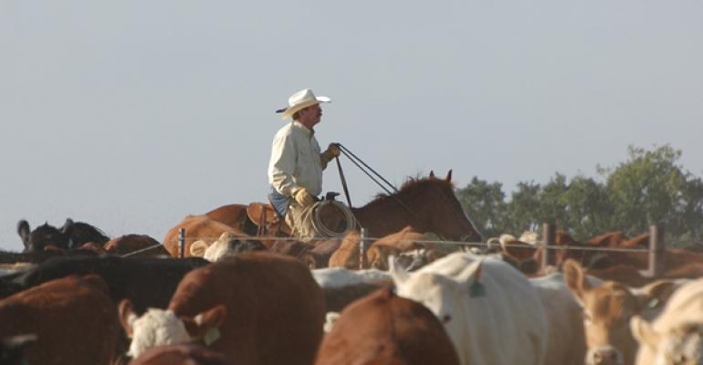 cattle marketing strategy tips