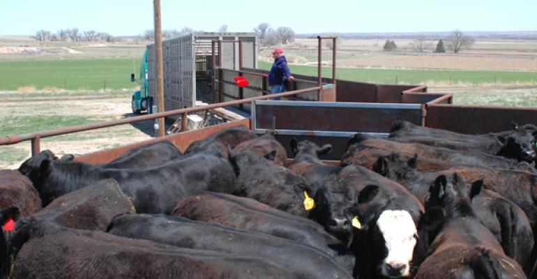 cattle placement numbers down