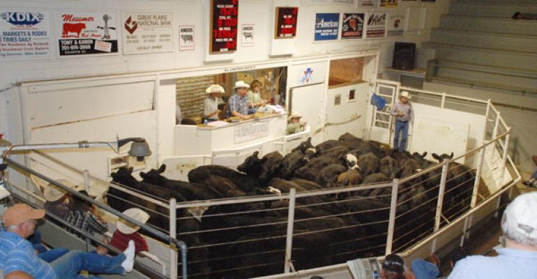 sale barn cattle price predictions