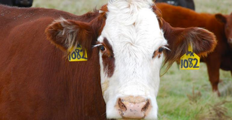 Cow Costs Are Record High