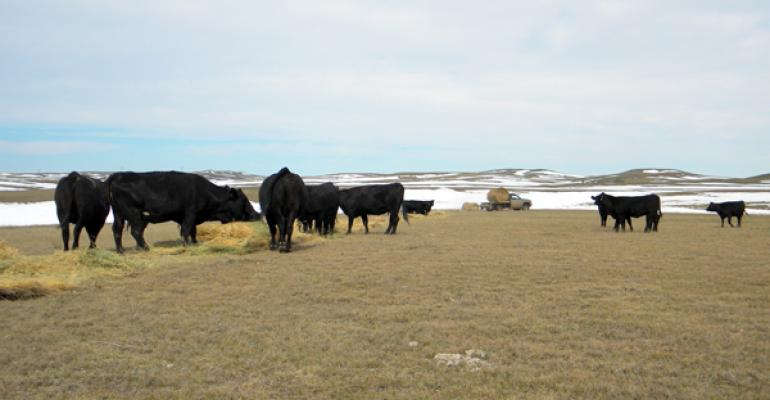 Donate Now To South Dakota's Rancher Relief Fund