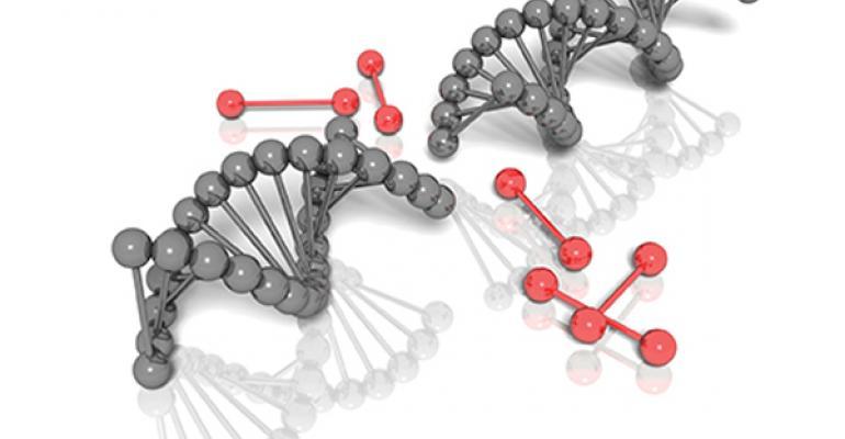 cattle genetic tips for vets