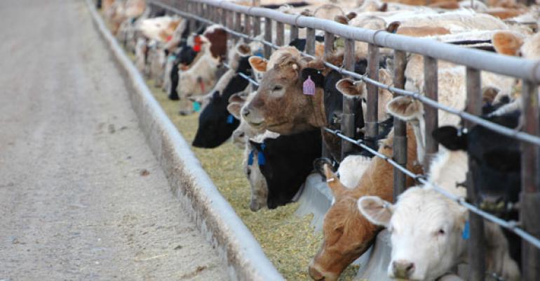 cattle feeding profits