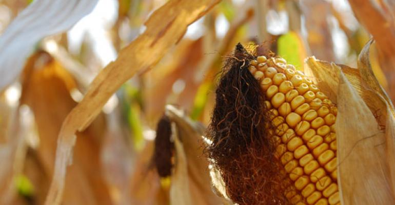 corn crop could be largest recorded