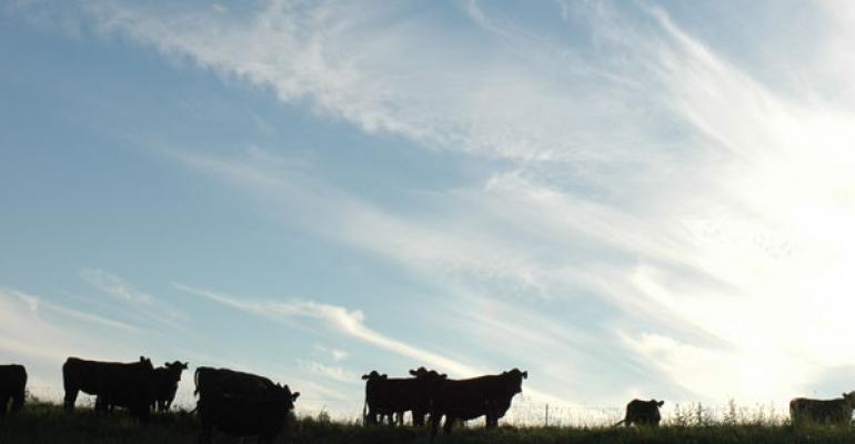 Okay, I'll Say It: The Beef Industry Has An Animal Welfare Problem