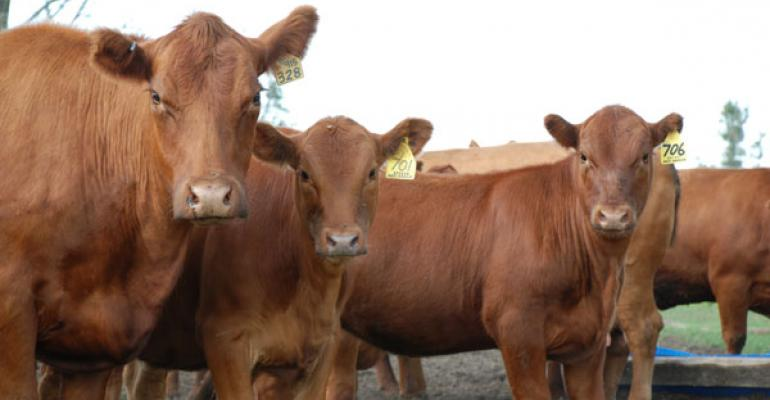 Cattle Numbers Must Increase To Maintain Infrastructure