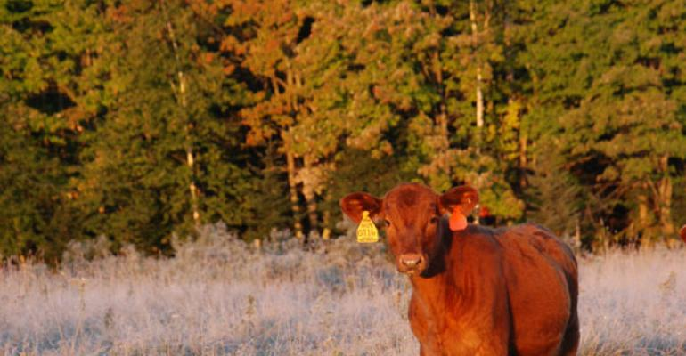 Calf Prices Show Signs Of Leveling