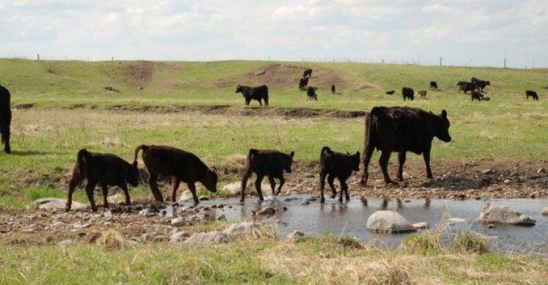 Rancher Reports Quadruplets; How Do You Manage Multiples?