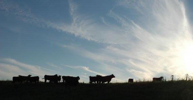 Proactive Pasture Management Can Improve Calving Rates