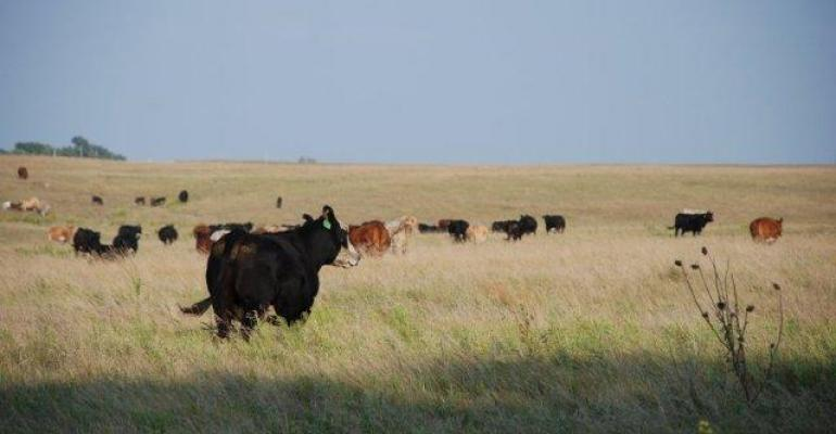 focus on basic cowcalf management to improve bottom line