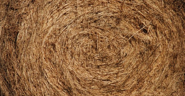 how to decrease feed costs for winter