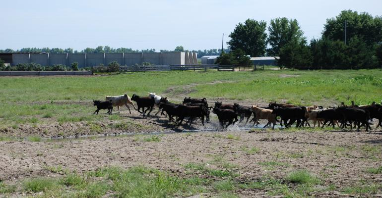 Tight Supplies Keep Pushing Cattle And Beef Prices Higher