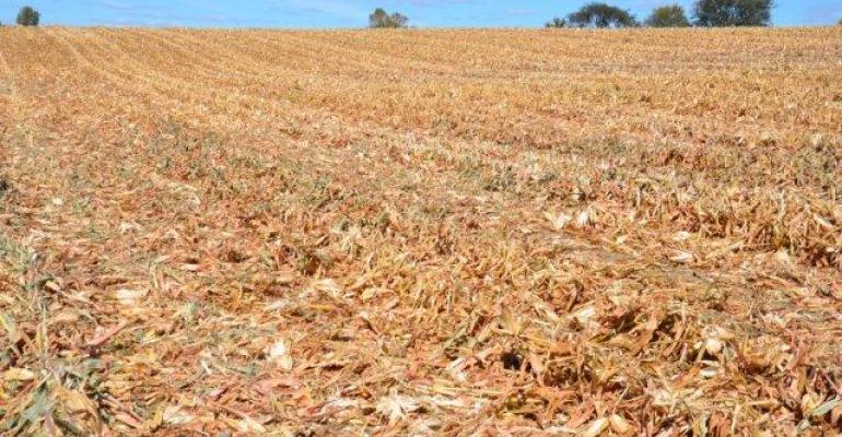 Corn Prices Find Apparent Floor