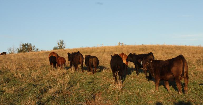 Readers' Winning Essays Remind Me Of Why I Love The Cattle Business