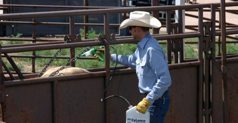 treating feeder calves with insecticide