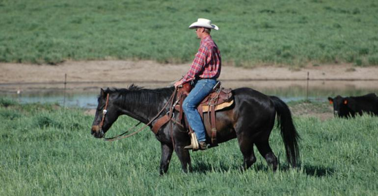 combatting stress in beef industry