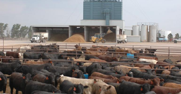 cattle supply and prices