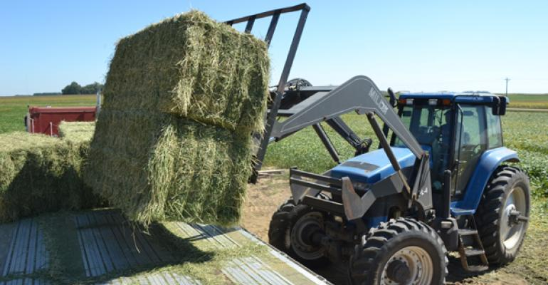 Nip Grass Hay Before It Heads, Or Else