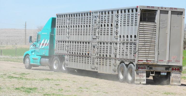 cattle prices market high boxed beef demand