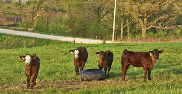 Industryleading Vaccine Combo Protects Calves