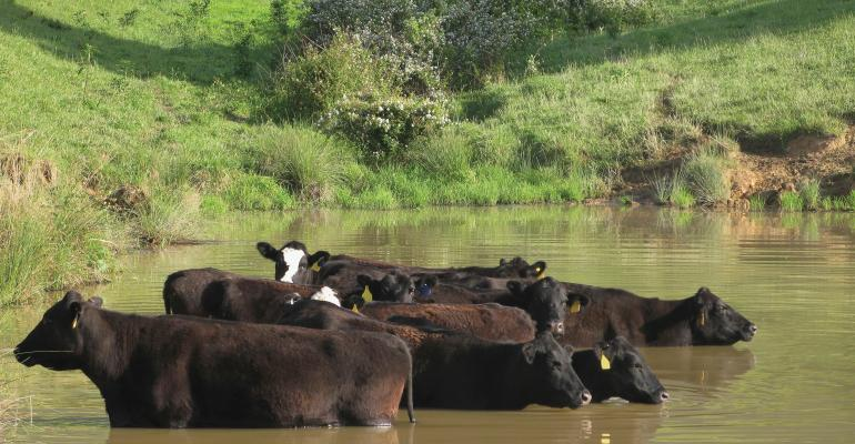 improving cattle health with nutrition