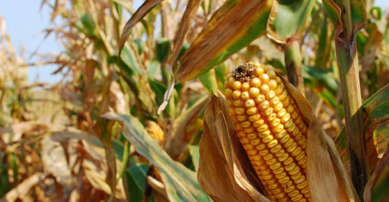 corn crop record