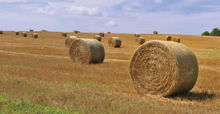 wrapping round bales cattle health consequences