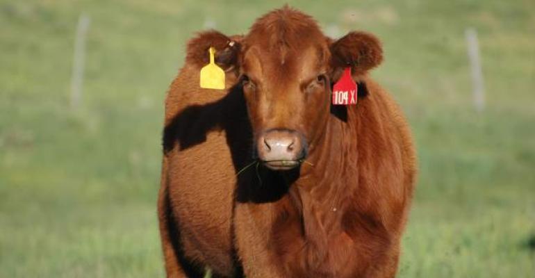 world beef supplies