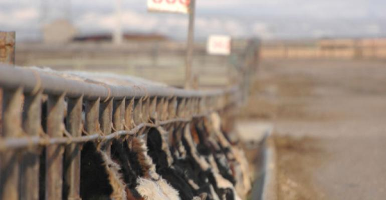 Cattle Market Has Proved The Folly Of Being Anti-Trade
