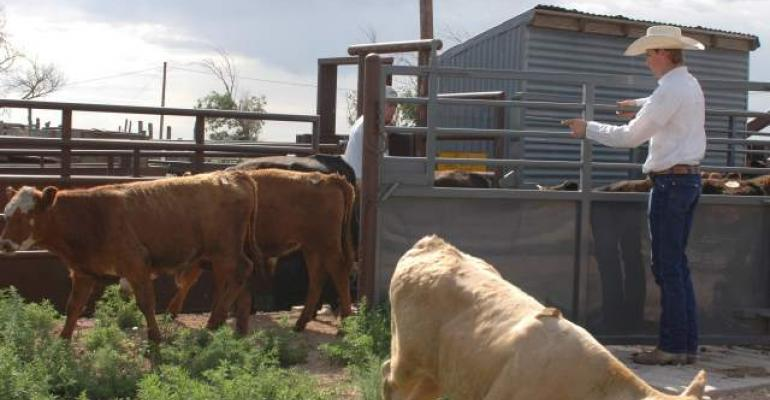 Merck Unveils New Cattle Handling Website