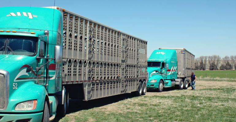 truck availability impacts calf prices