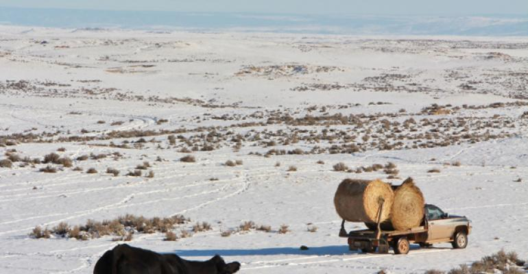 winter cow management tips